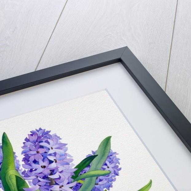 Blue Hyacinths by Christopher Ryland
