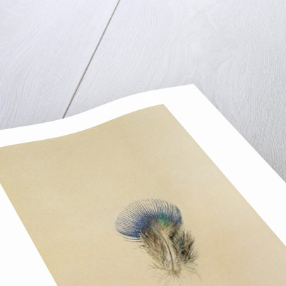 Study of a Peacock Feather, 1873 by John Ruskin