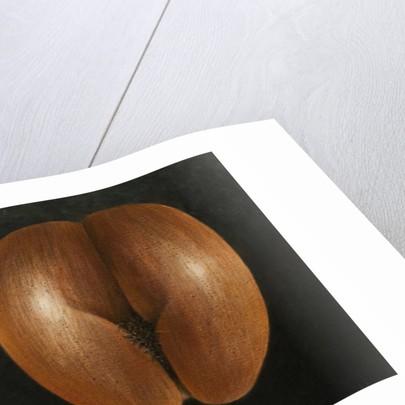 Coco de Mer by Lincoln Seligman