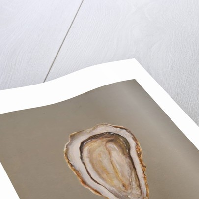 Oyster 1 by Lincoln Seligman