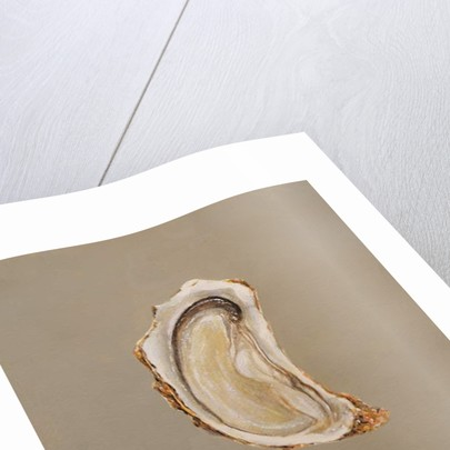 Oyster 2 by Lincoln Seligman