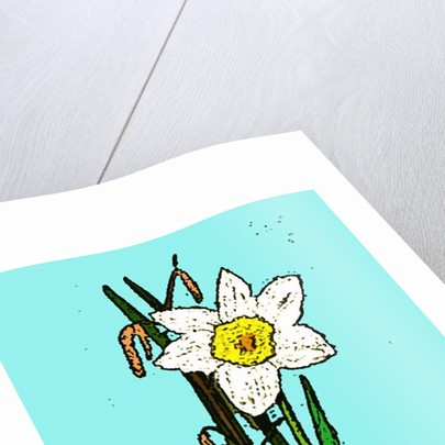 Daffodils, 2015 by Sarah Thompson-Engels