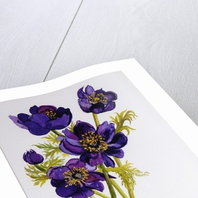 Anemones by Joan Thewsey