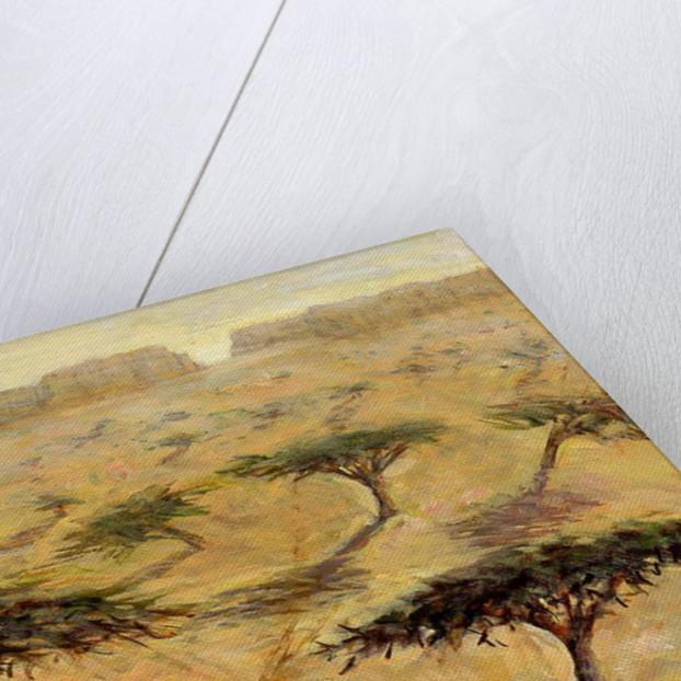 Sahelian Landscape by Tilly Willis
