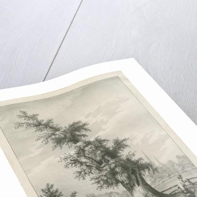 Lichfield - 'Dr. Johnson's' Willow Tree by Charles Joseph Hullmandel