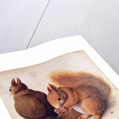 Squirrels by Albrecht Dürer or Duerer