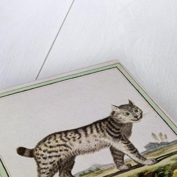 Canadian Lynx (Lynx Canadensis) by French School