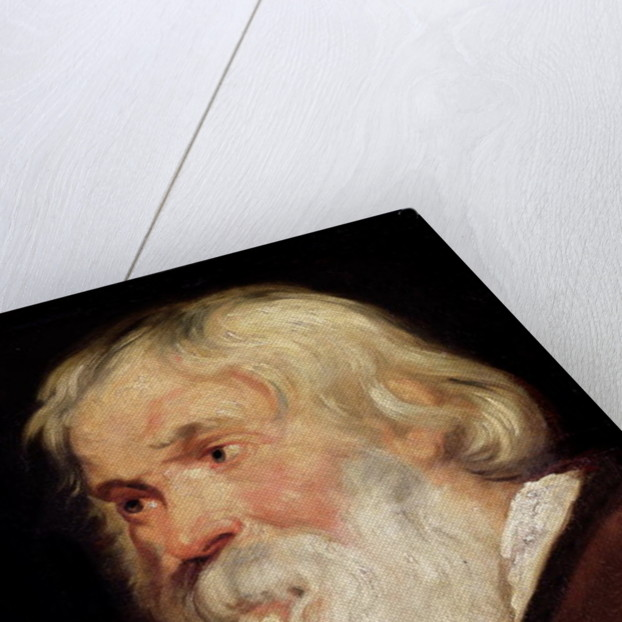 Head of an Old Man by Peter Paul Rubens
