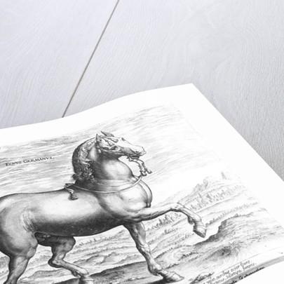Equus Germanus by Jan van der Straet