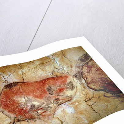 Bison from the Altamira Caves by Prehistoric