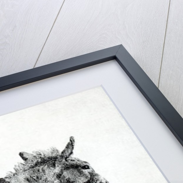 Donkey by George Stubbs