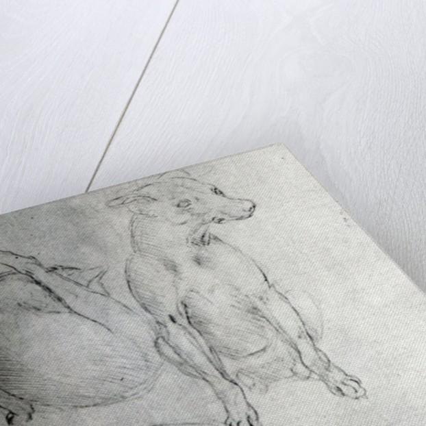 Study of a dog and a cat by Leonardo da Vinci