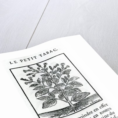 le Perit Tabac by French School