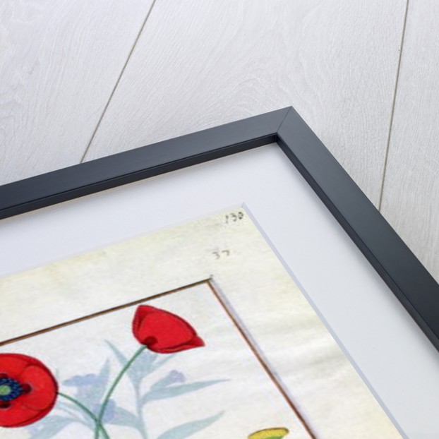 Linum, Garden poppies and Abrotanum by Robinet Testard