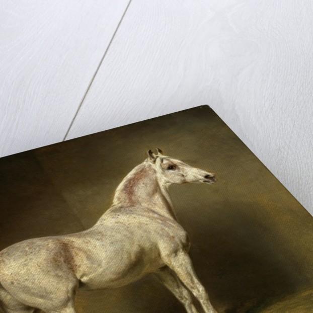 Beatrice, the white arab saddlehorse of Helmuth Graf von Moltke by Carl Constantin Steffeck
