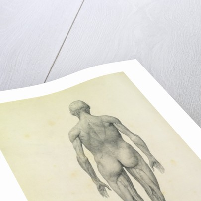 The Human Figure, anterior view by George Stubbs