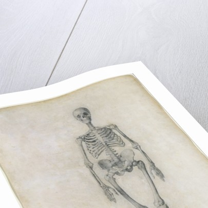 The Human Skeleton, anterior view by George Stubbs