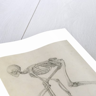Human Skeleton: Lateral view in Crouching Posture by George Stubbs