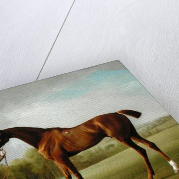 Lustre, held by a Groom by George Stubbs