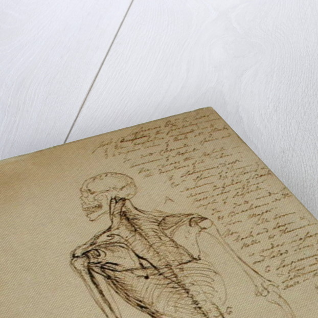 Drawing of a Man's Skeleton by James Ward