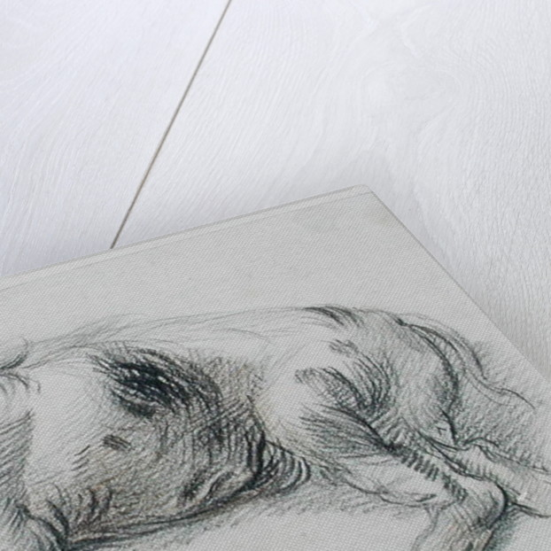 Sleeping Pig by James Ward
