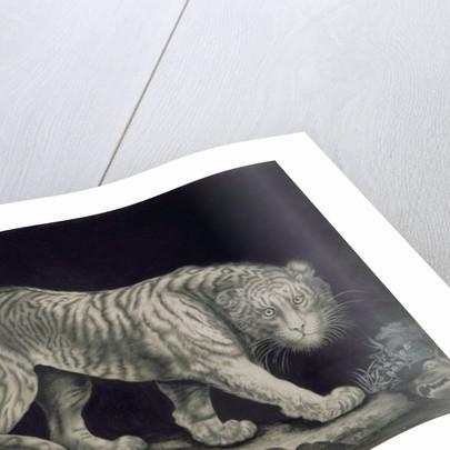 A Prowling Tiger by Elizabeth Pringle