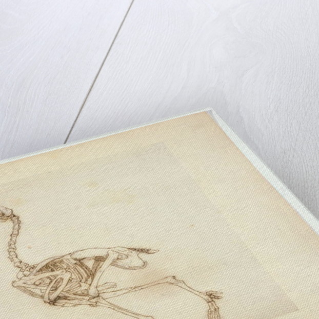 Dorking Hen Skeleton, Lateral View by George Stubbs