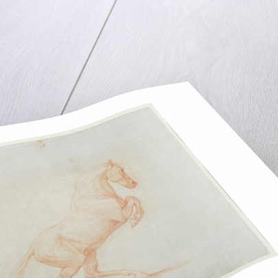 A Prancing Horse, facing right by George Stubbs