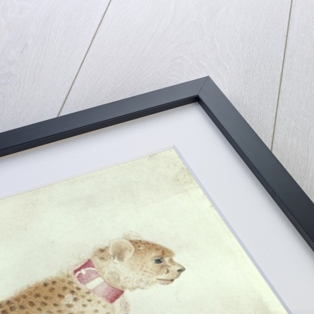 Bounding cheetah with a red collar by Antonio Pisanello