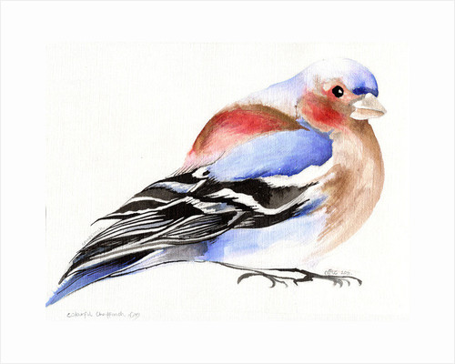 Colourful Chaffinch by Nancy Moniz Charalambous