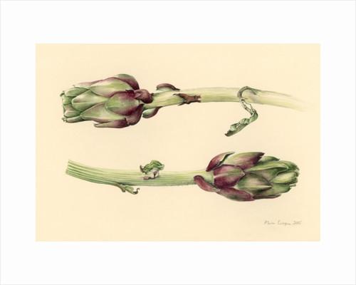 Artichokes by Alison Cooper