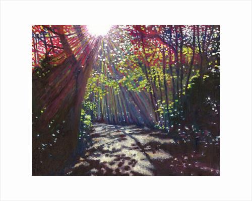 Scattered light by Helen White