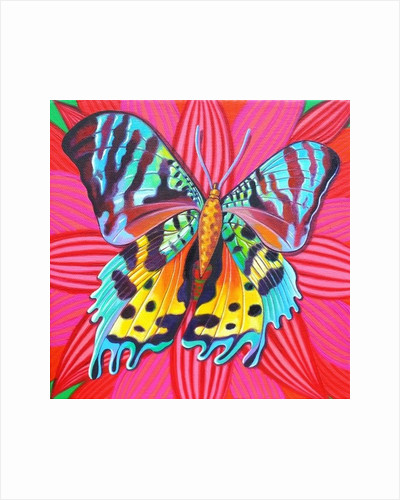 Sunset Moth by Jane Tattersfield