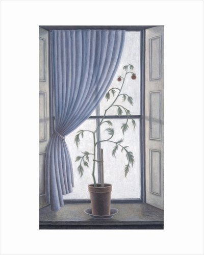Plant in Window by Ruth Addinall