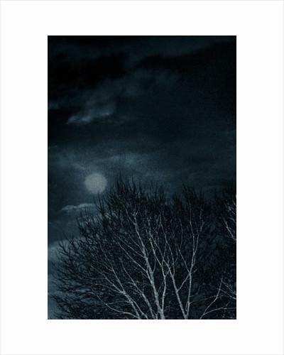 Harvest Moon by Alice Gur-Arie