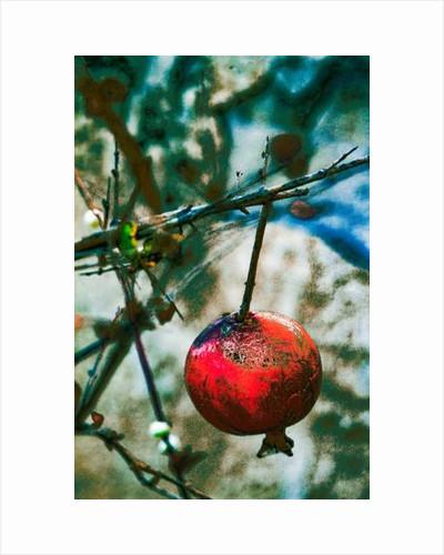 Jerusalem Pomegranate by Joy Lions