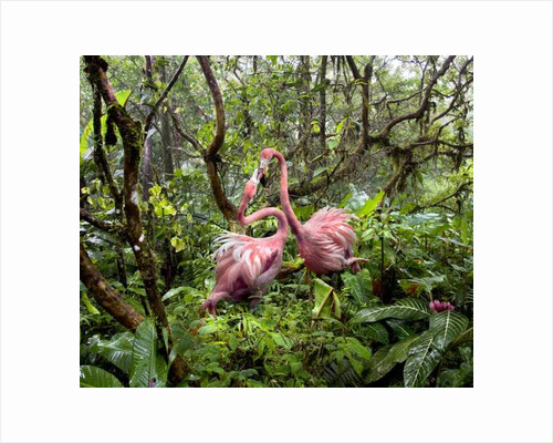 Two Flamingos Find Love in the Jungle by Pat swain