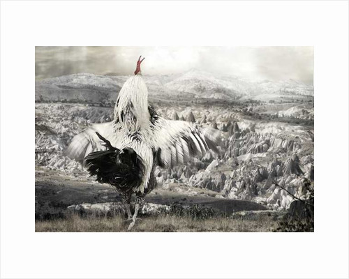 Chicken with spread wings by Pat swain