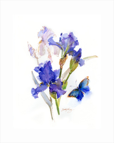 Iris with blue butterfly, 2016 by John Keeling