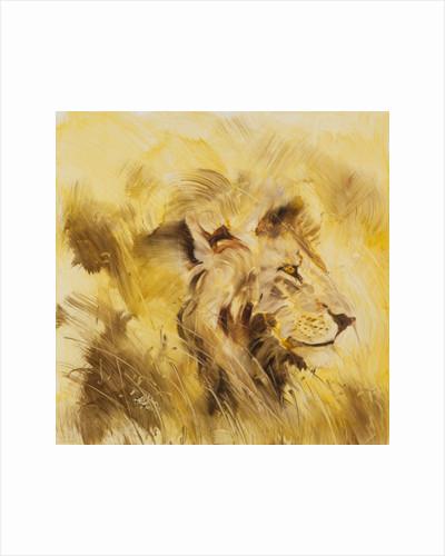 Lion, 2014 by FRANCESCA SANDERS