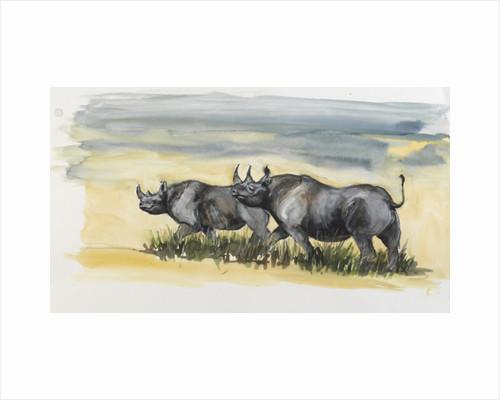 black rhinos in Masai mara, 2012 by FRANCESCA SANDERS