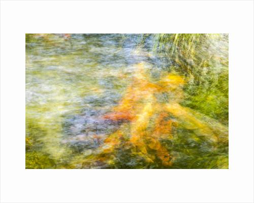 Koi Pond Photo Impressionism, 2016 by Joseph S Giacalone