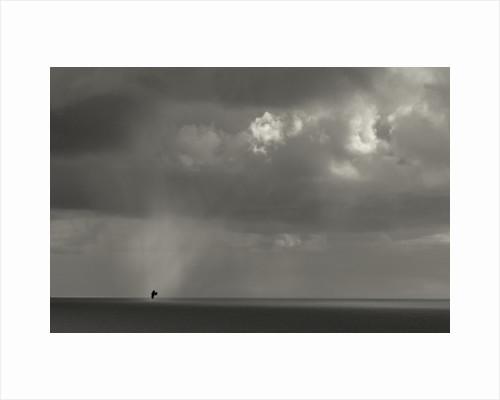 Bird Flies Through Shaft of Light, 2012 by Paul Gillard