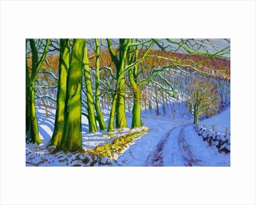 Green Trees, Winter;Dam Lane; Derbyshire by Andrew Macara