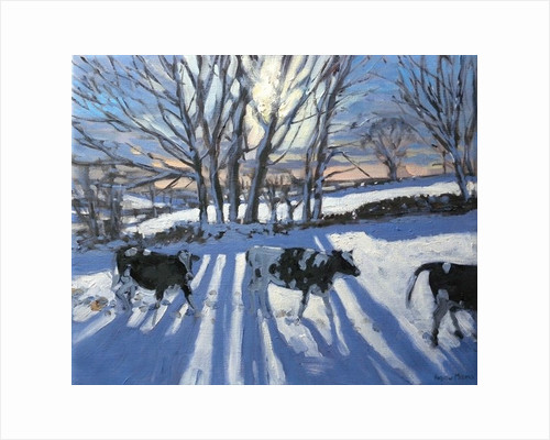 Friesian Cows by Andrew Macara