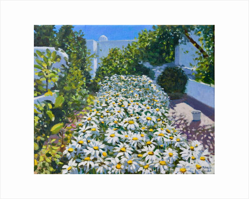 Daisies, 2018 by Andrew Macara