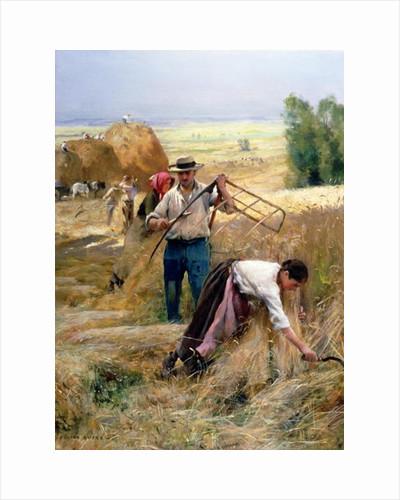 Harvesting by Julien Dupre