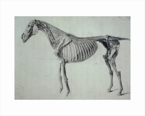Finished Study for the Fifth Anatomical Table of a Horse by George Stubbs