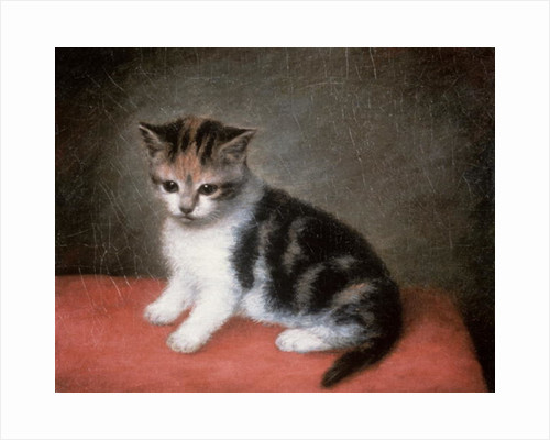Miss Ann White's Kitten by George Stubbs
