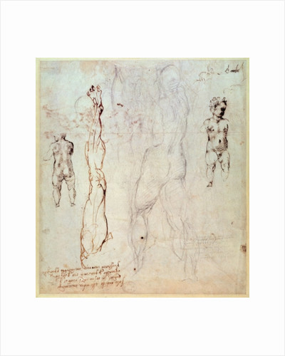 Anatomical drawings with accompanying notes by Michelangelo Buonarroti